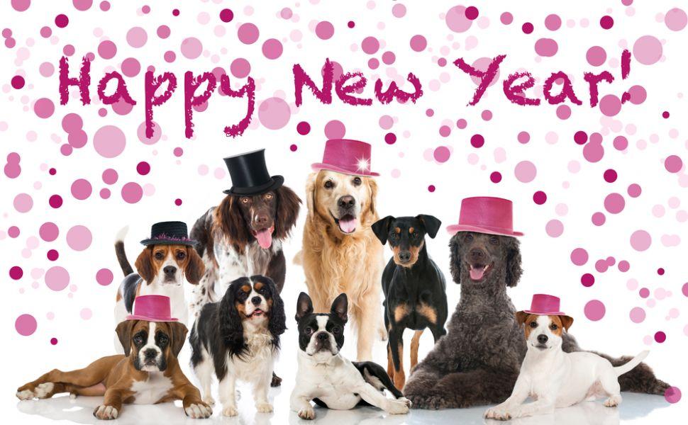 Urari de Anul Nou: 10 mesaje si sms-uri pe care le poti trimite celor dragi