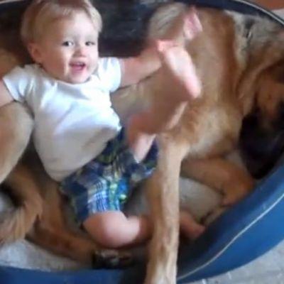 Reactia adorabila a unui ciobanesc german. Cum se comporta cand bebelusul nu il lasa sa doarma
