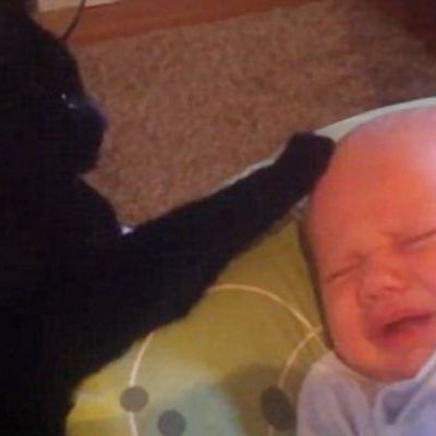 Emotionant! Uite cum reuseste o pisica sa-l aline pe bebelusul plangacios din imagini
