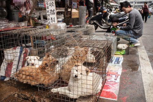Decizie fără precendent luată în China, din cauza coronavirusului. Ce se va întâmpla cu pisicile și cățeii